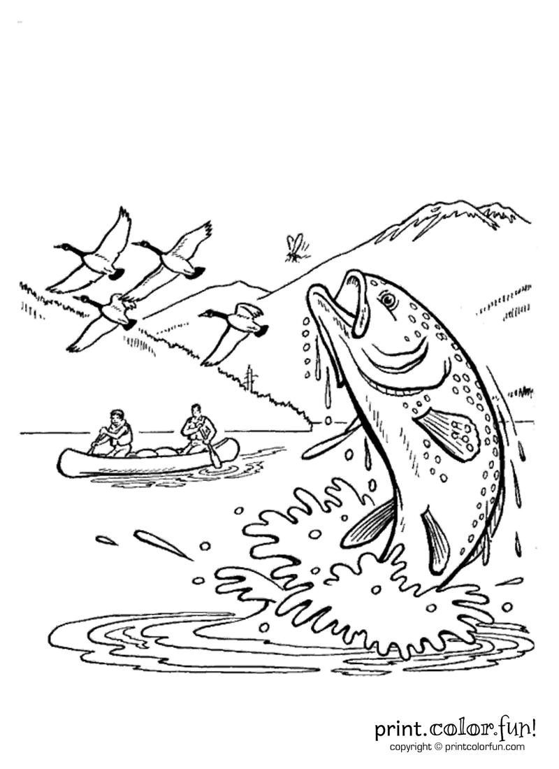 fun and fish in alaska coloring page  print. color. fun!