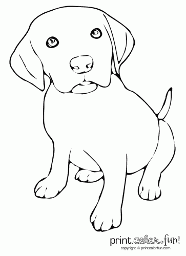 Puppy World: Cute Puppy Pictures To Print