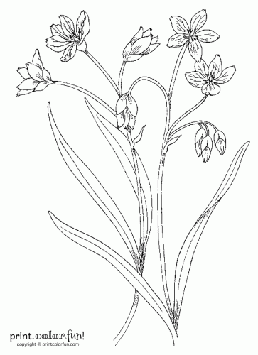 flower stems Colouring Pages