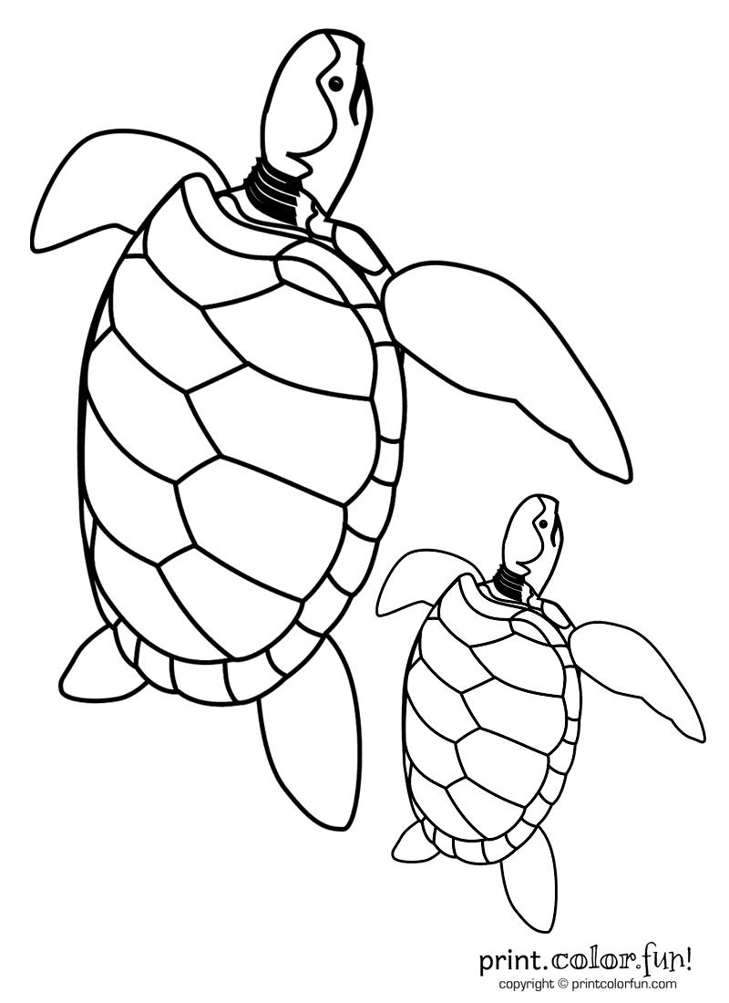 baby turtle u0026 dad coloring page print color fun