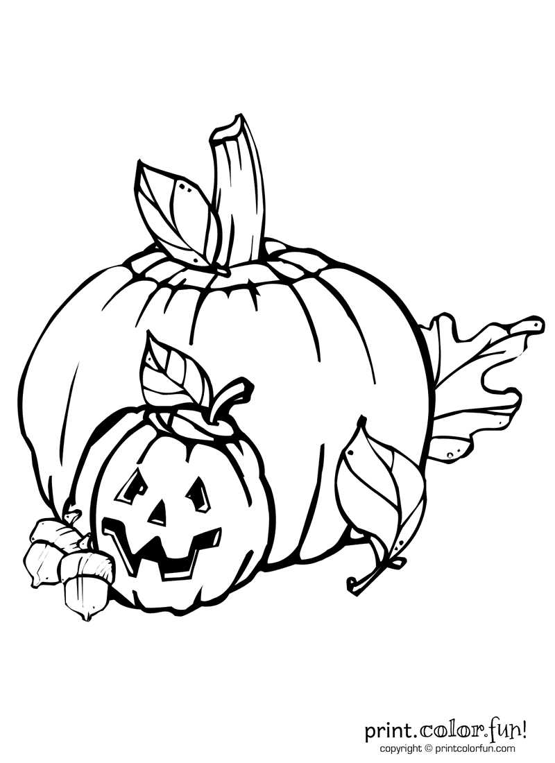 Pumpkin and Jack O Lantern coloring