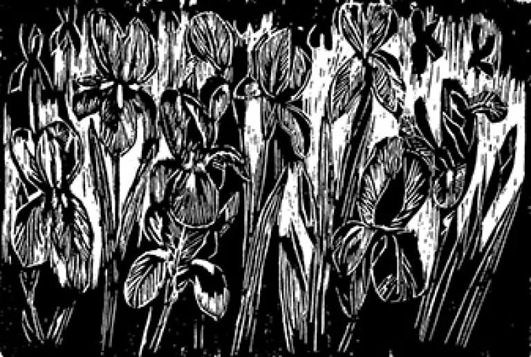 Carolyn Stafford, Bed of Irises, Woodcut