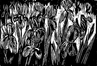 Carolyn Stafford, Bed of Irises, Woodcut