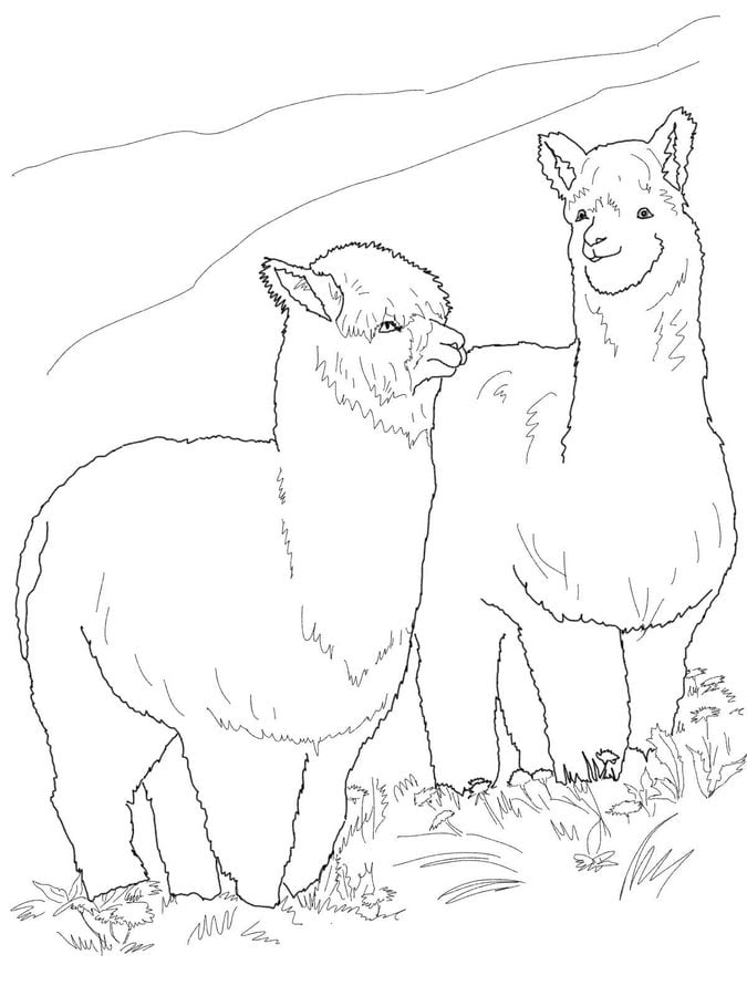 ausmalbilder ausmalbilder alpaka zum ausdrucken