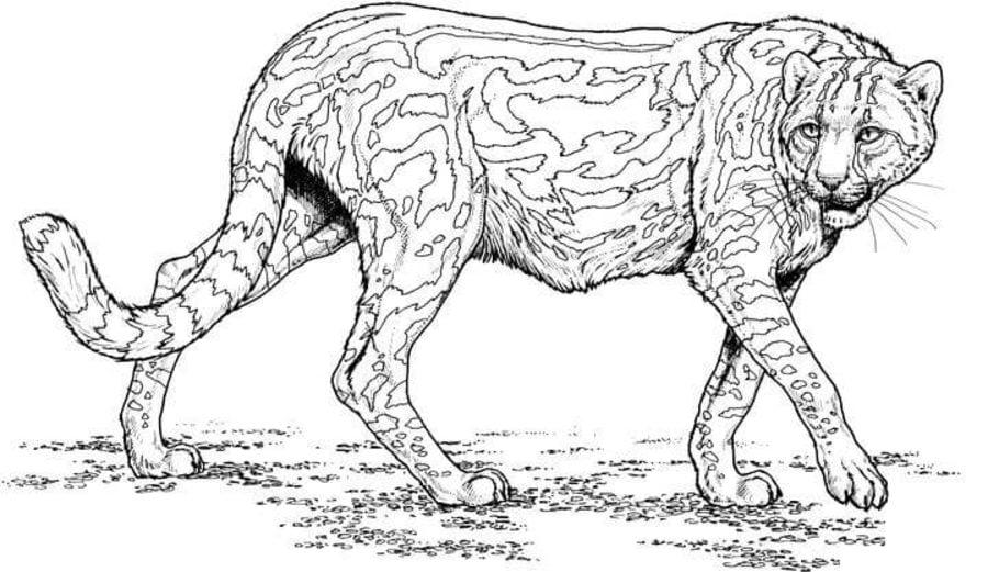 ausmalbilder ausmalbilder gepard zum ausdrucken