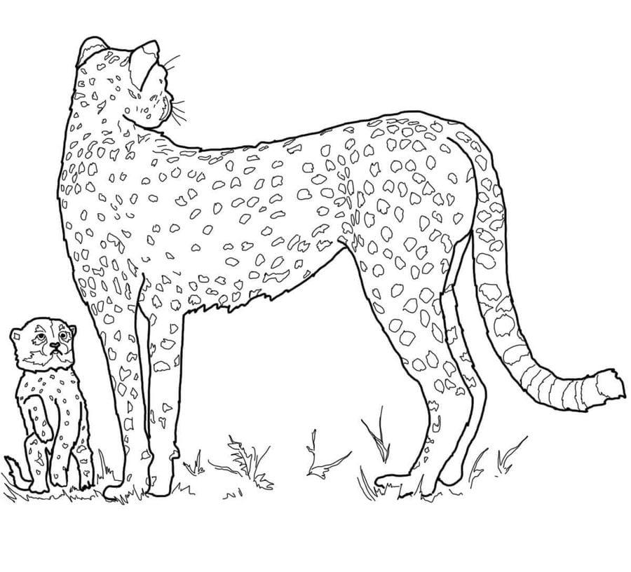 Ausmalbilder: Ausmalbilder: Gepard zum ausdrucken