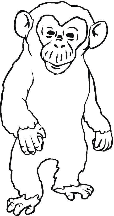 Kolorowanki: Kolorowanki: Szympans do druku dla dzieci i