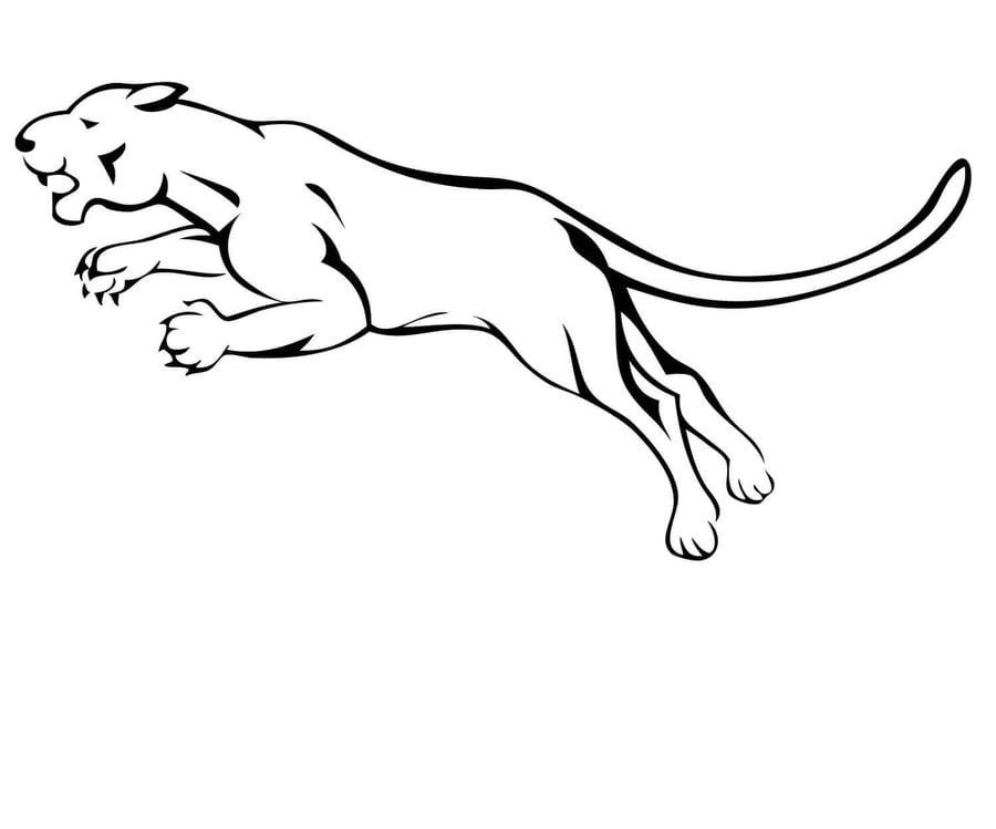 Dibujos para colorear Puma imprimible gratis para los