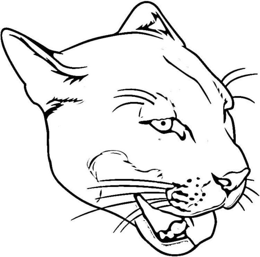 Malvorlage puma für erwachsene Coloring and Malvorlagan