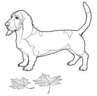 Disegni da colorare: Cani stampabile, gratuito, per ...