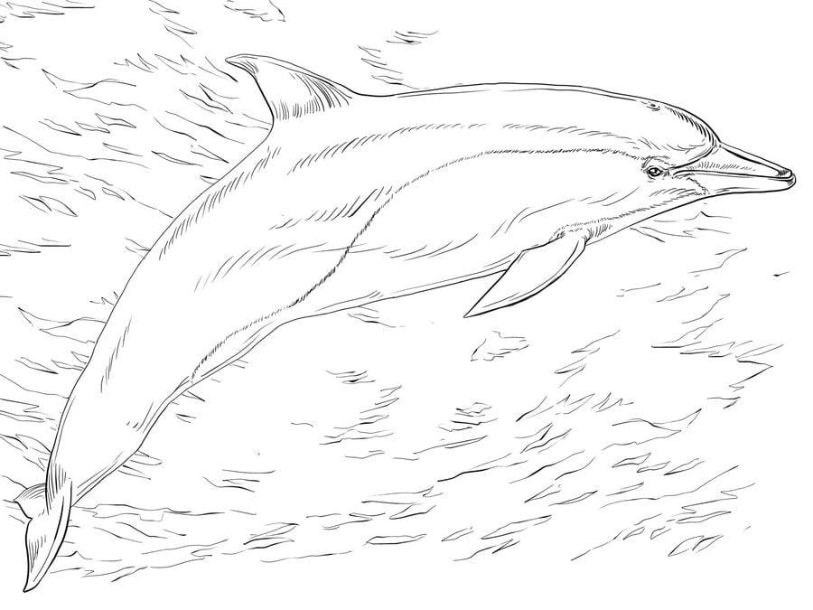 ausmalbilder: ausmalbilder: delfine zum ausdrucken