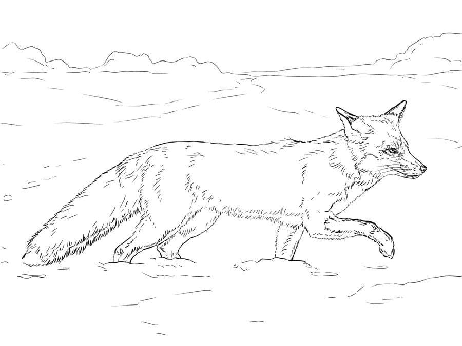 Ausmalbilder: Ausmalbilder: Füchse zum ausdrucken