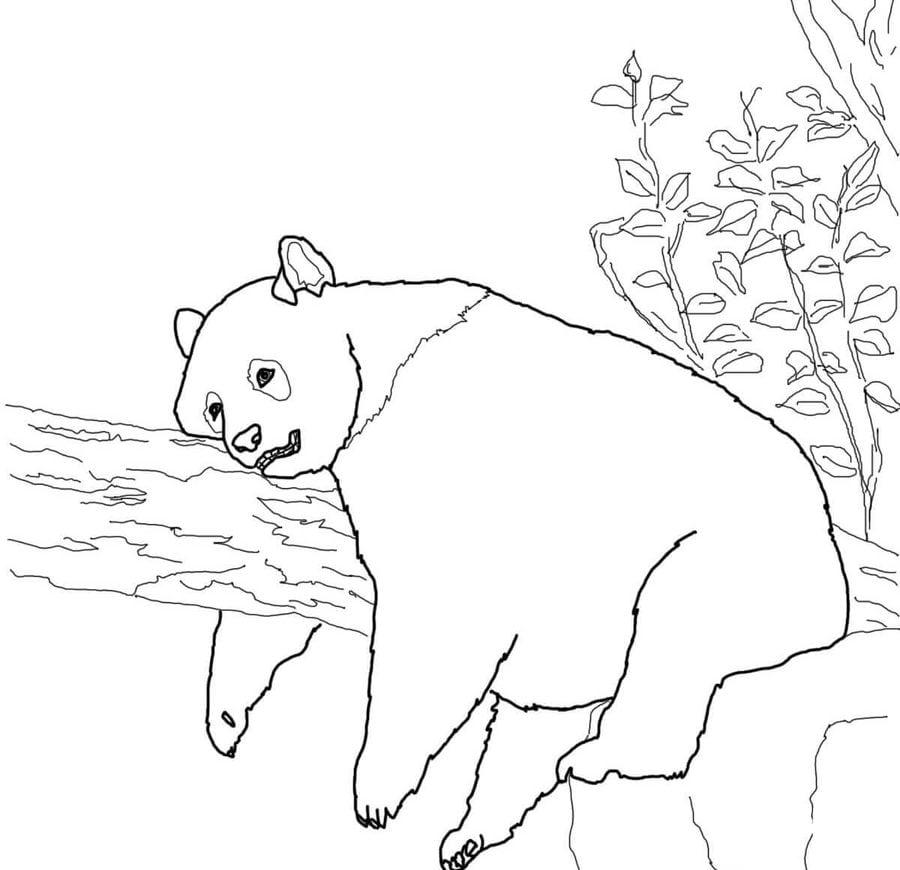 ausmalbilder ausmalbilder großer panda zum ausdrucken