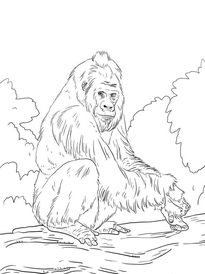 ausmalbilder ausmalbilder gorillas zum ausdrucken