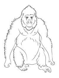Disegni da colorare: Gorilla stampabile, gratuito, per ...