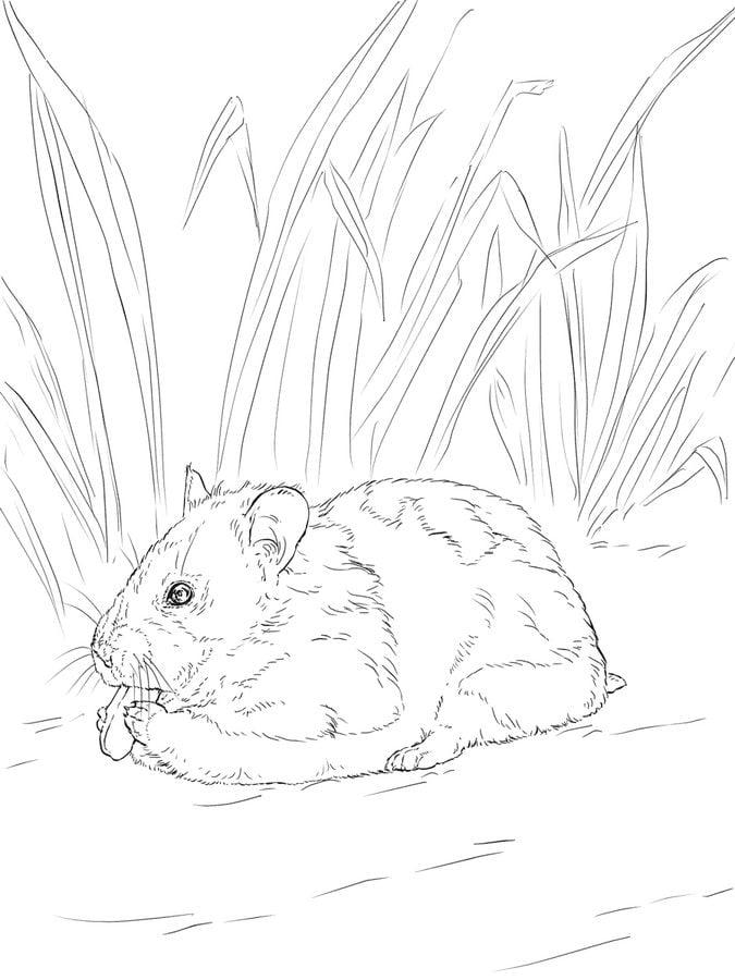 Hamster Ausmalbild
