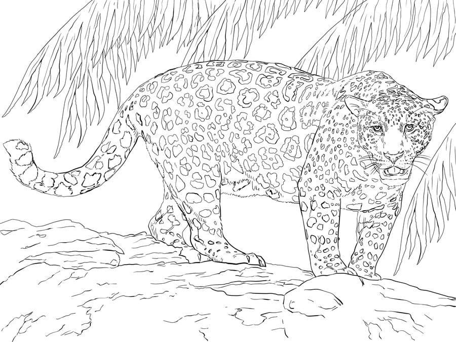 Ausmalbilder: Jaguar zum ausdrucken, kostenlos, für Kinder