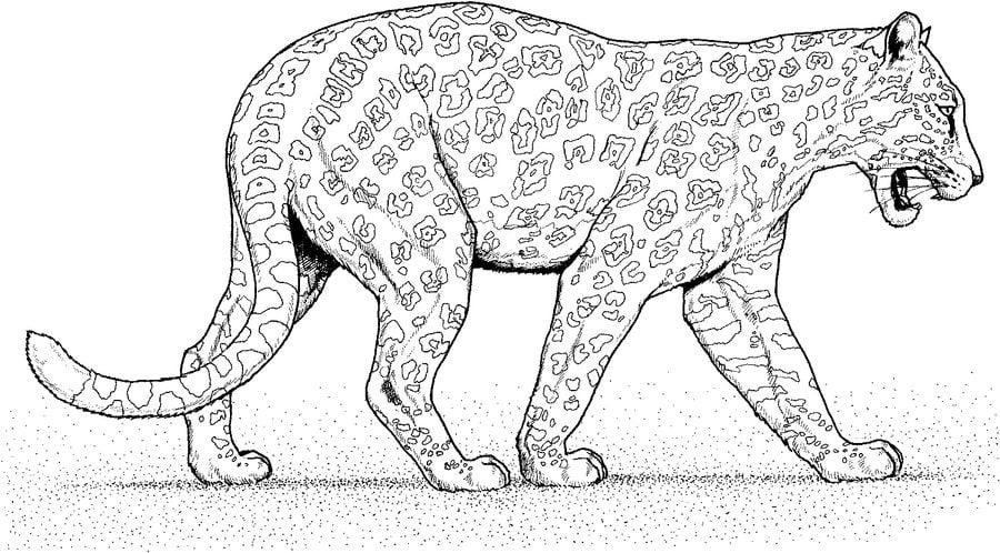 Coloriages Jaguar Imprimable Gratuit Pour Les Enfants Et Les Adultes