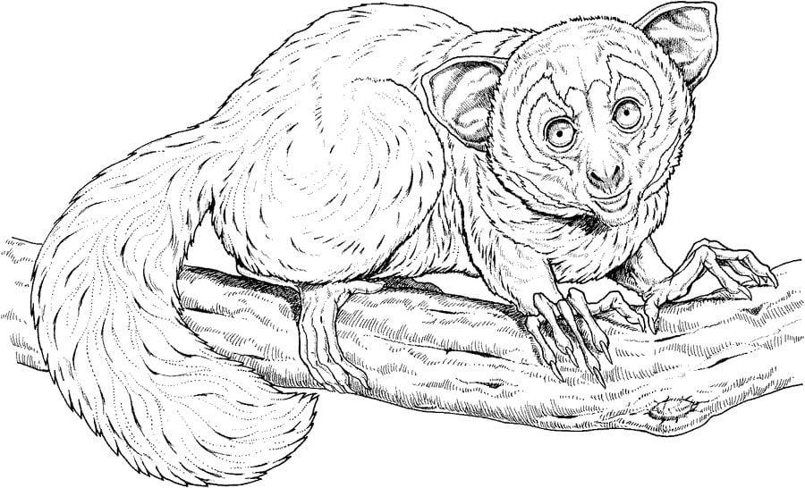 ausmalbilder ausmalbilder lemur zum ausdrucken