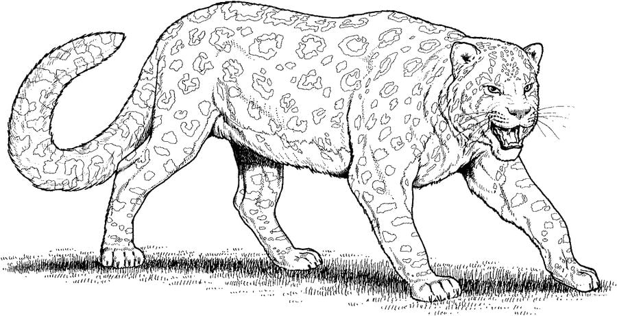 Ausmalbilder Ausmalbilder Leopard Zum Ausdrucken