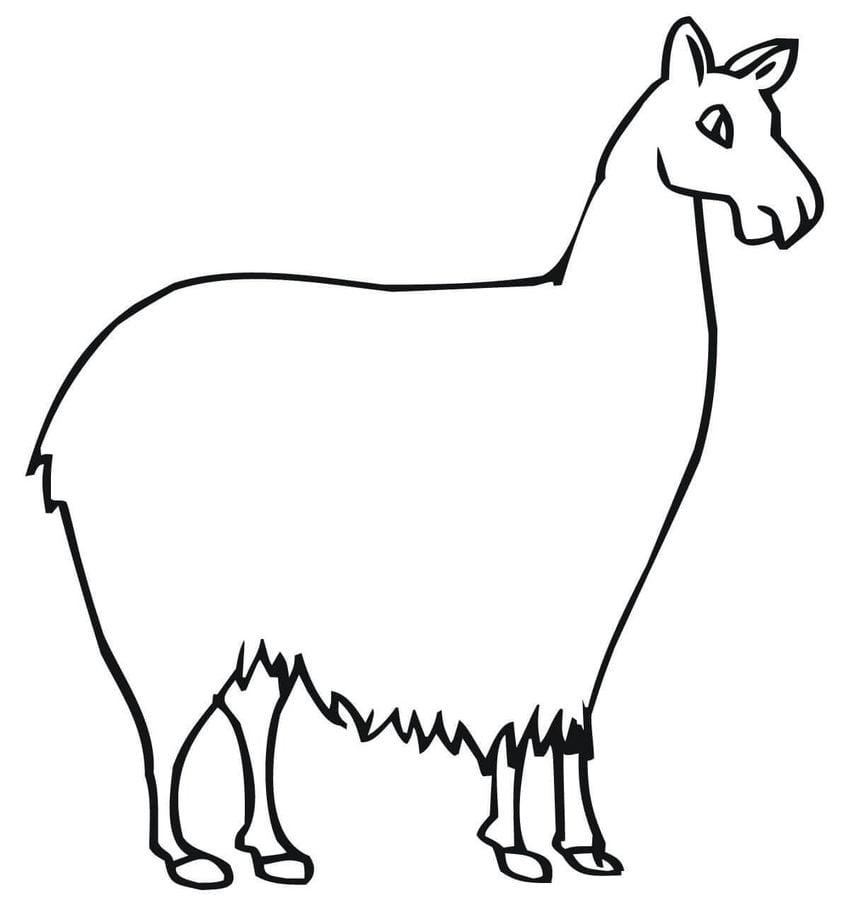 Dibujos Para Colorear Llama Imprimible Gratis Para Los Niños Y