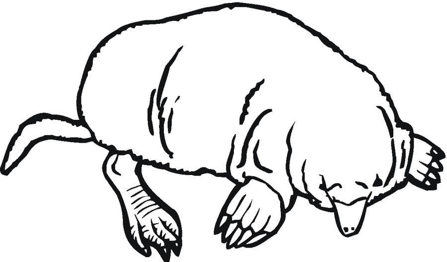 Ausmalbilder Moshi Monsters Zum Ausdrucken Kostenlos