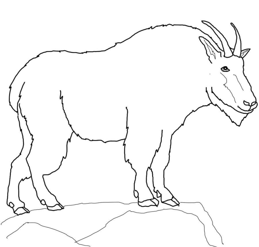 Coloring pages: Mountain Goat, printable for kids & adults