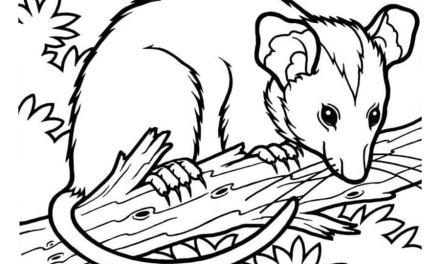 Ausmalbilder: Opossums