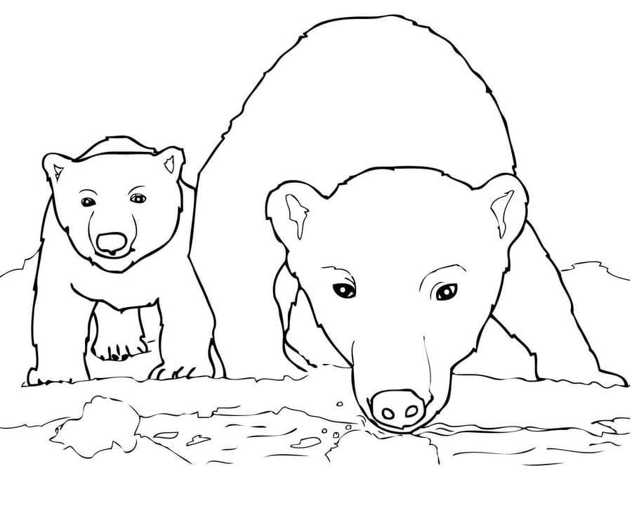 Disegni da colorare: Orso polare stampabile, gratuito, per