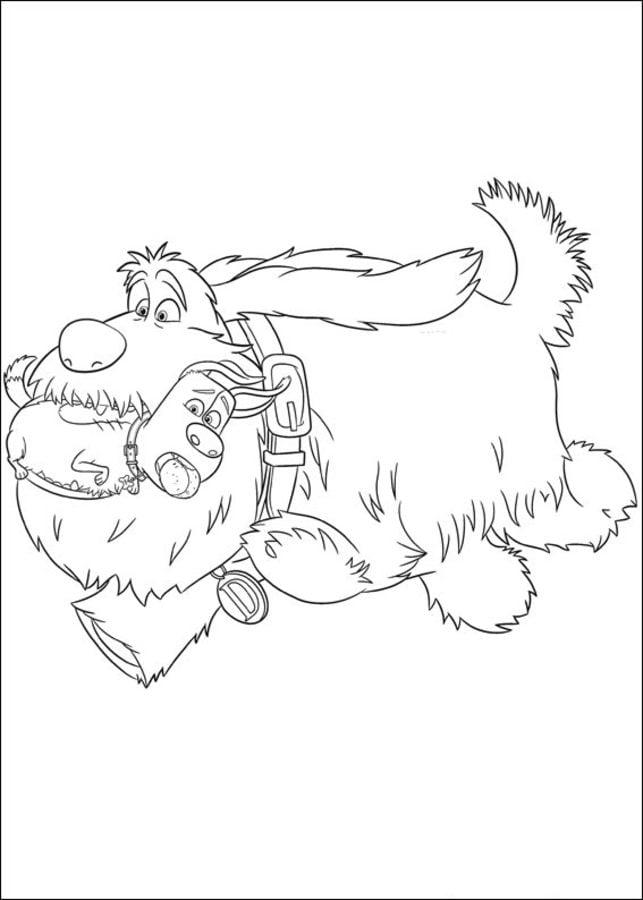 Dibujos para colorear: La vida secreta de tus mascotas
