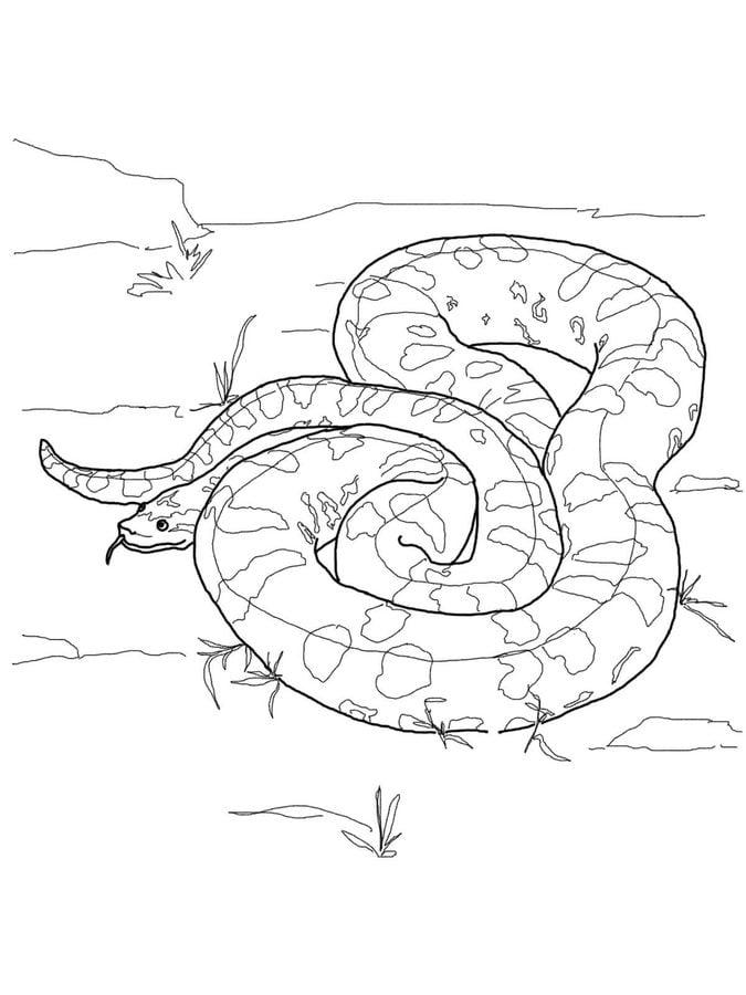 Disegni da colorare: Anaconda stampabile, gratuito, per
