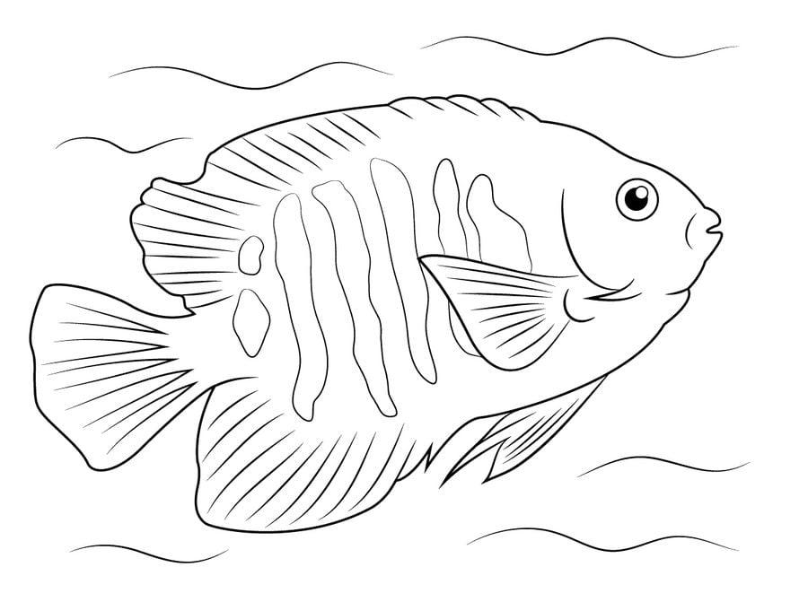 Disegni Da Colorare Disegni Da Colorare Pesce Angelo