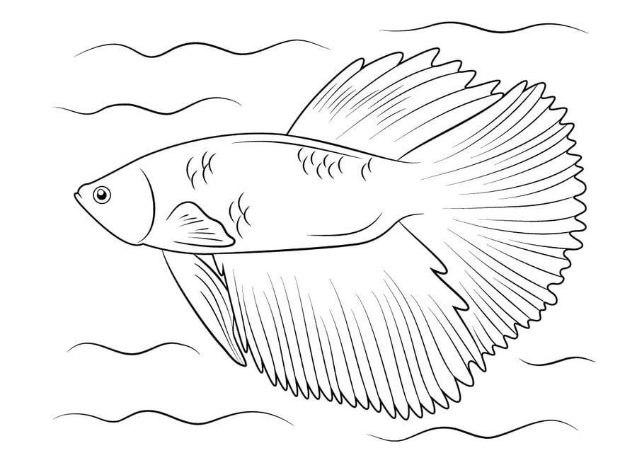 Male Betta Fish Coloring Coloring Coloring Pages