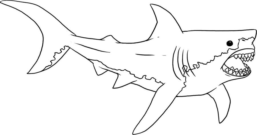 Dibujos para colorear: Tiburones azules imprimible, gratis
