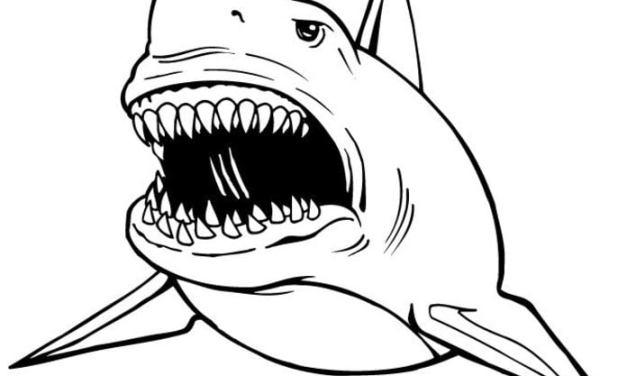 Ausmalbilder: Bullenhai