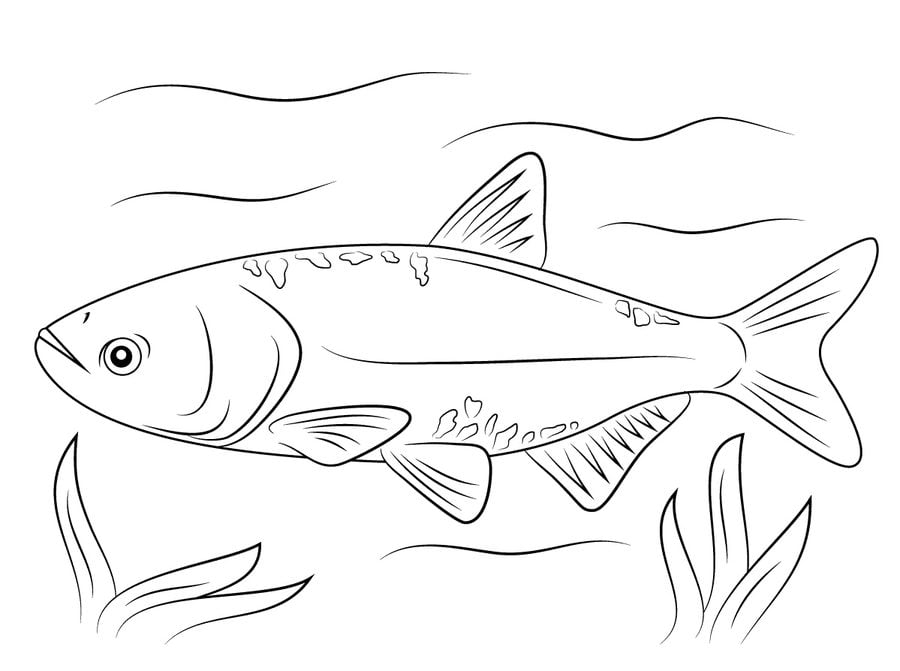 Kleurplaat Tropische Vissen Hammerhai Ausmalbild