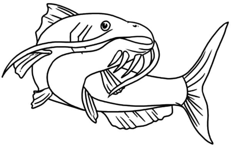 Channel Catfish Coloring Page