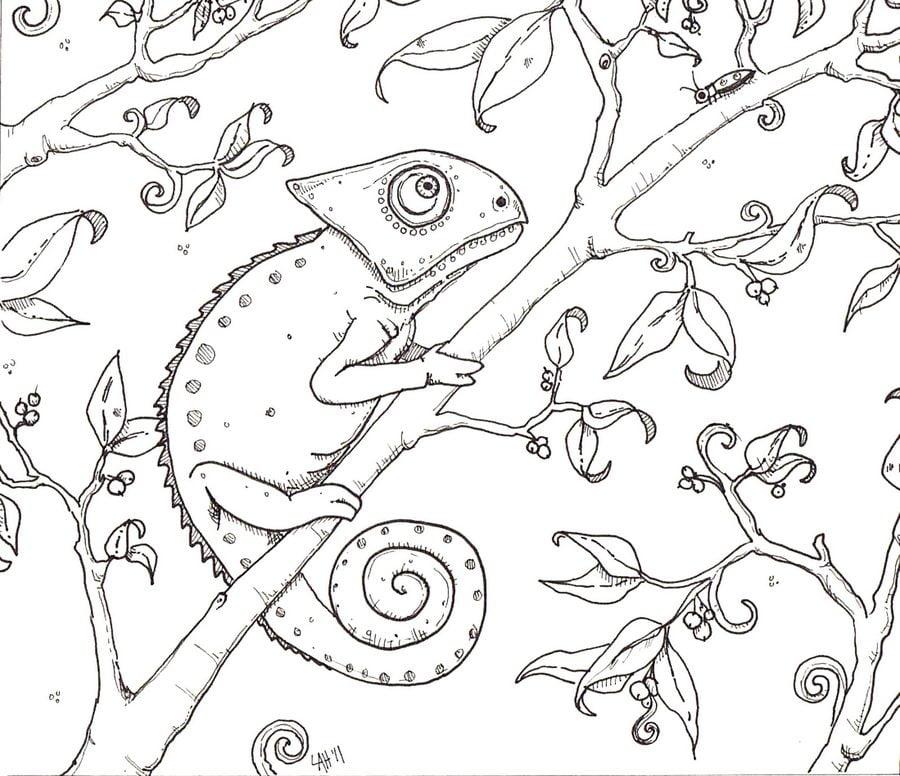 Disegni da colorare: Camaleonte stampabile, gratuito, per