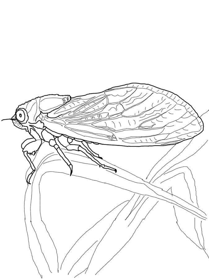 Cicada   Super Coloring   cicada   Drawings, Coloring ...
