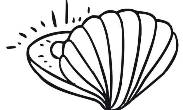 Ausmalbilder: Muschel