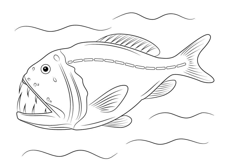 Kleurplaat Tropische Vissen Kleurplaten Vissen Kleurplaten