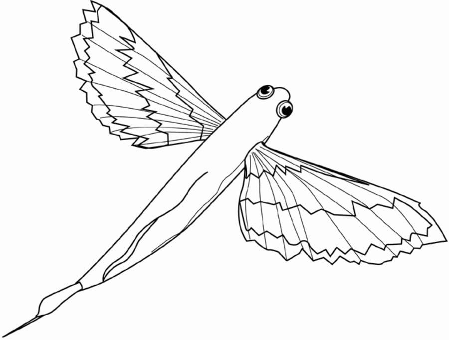 Flyingfishing