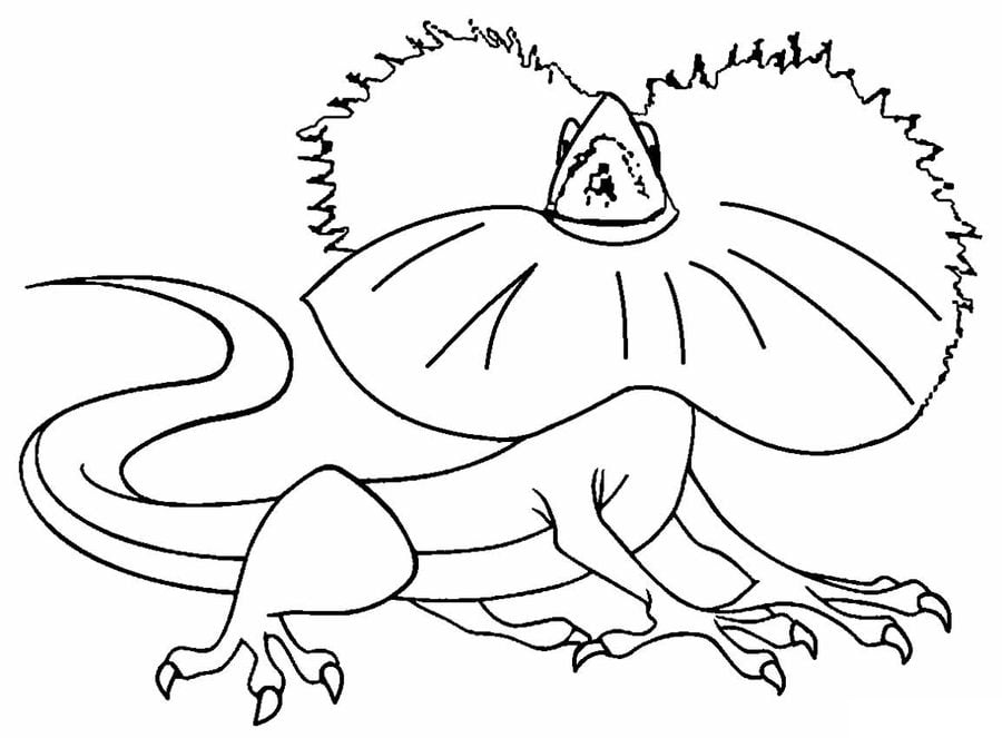 Coloring Pages Coloring Pages Frill Necked Lizard Printable For Kids Adults Free