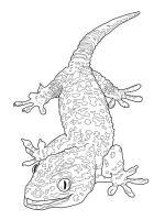 Ausmalbilder Gecko zum ausdrucken, kostenlos, für Kinder ...