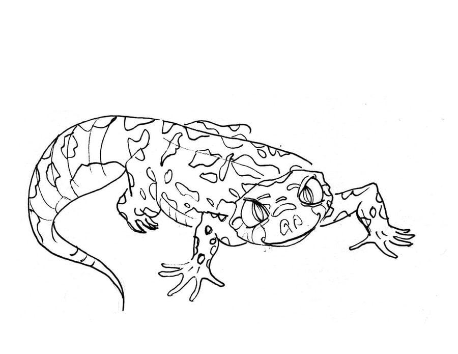 Ausmalbilder: Gecko zum ausdrucken, kostenlos, für Kinder