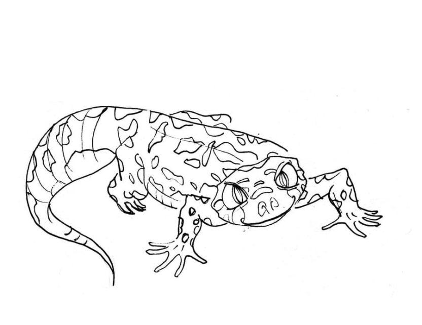 Ausmalbilder Ausmalbilder Gecko Zum Ausdrucken Kostenlos Für