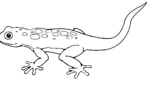 Ausmalbilder: Gecko