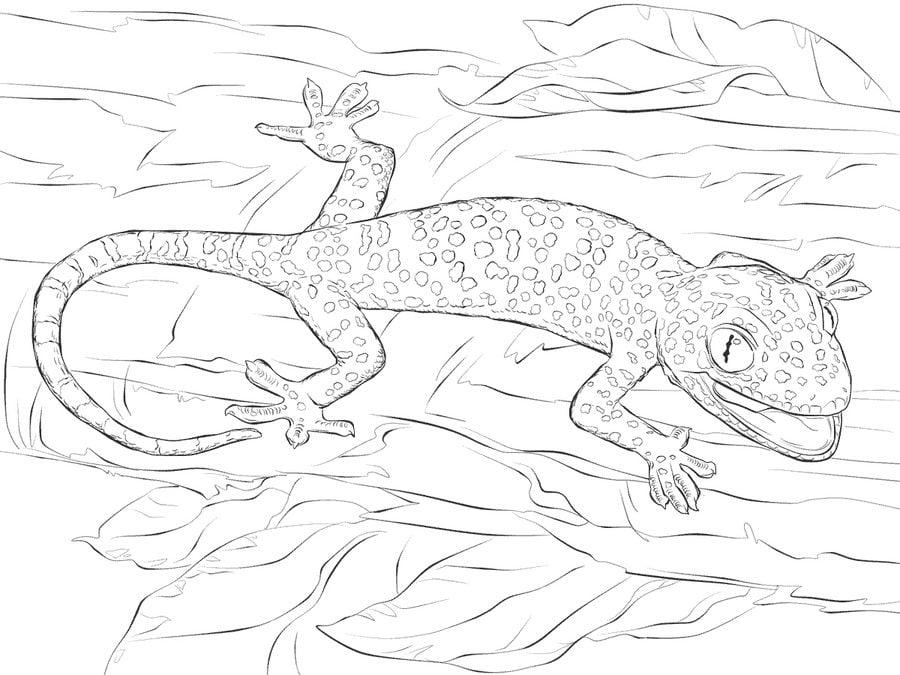 Ausmalbilder Ausmalbilder Gecko zum ausdrucken ...