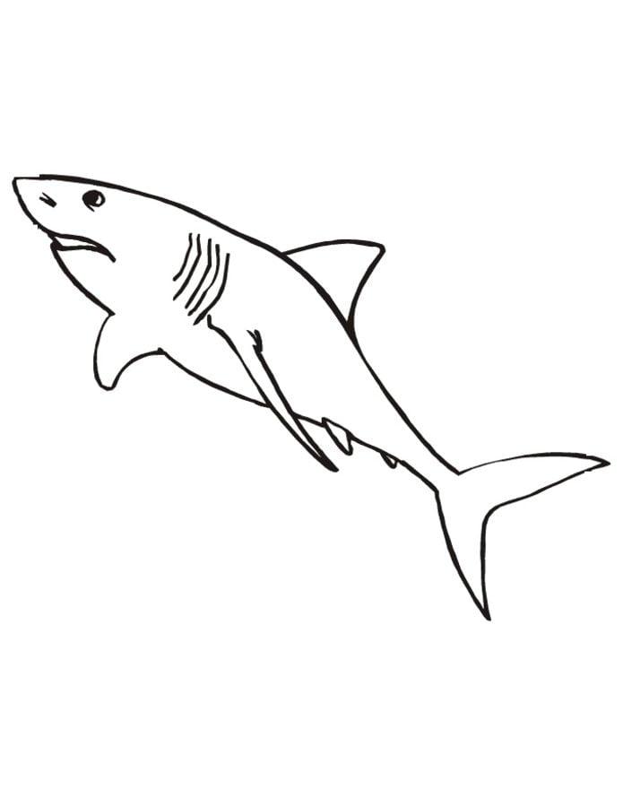 Ausmalbilder Ausmalbilder Weißer Hai Zum Ausdrucken Kostenlos