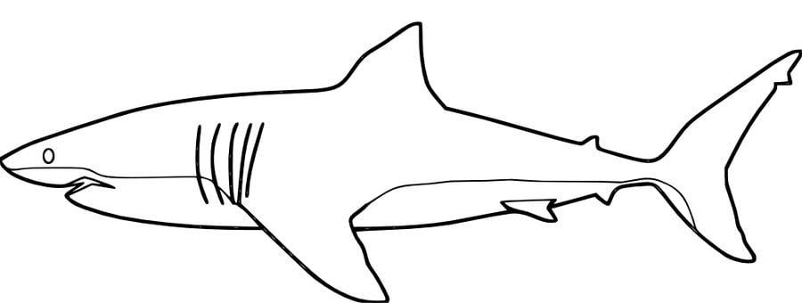 ausmalbilder ausmalbilder weißer hai zum ausdrucken